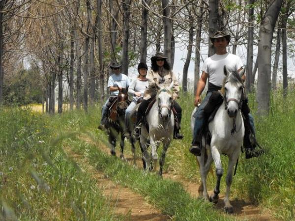 טיולי סוסים בגליל המערבי- חוות כברית