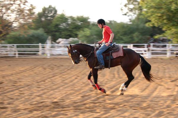 חוות ורד הגליל | טיולי סוסים בכנרת